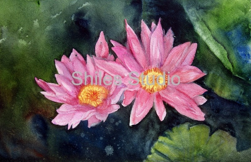 se water lilies