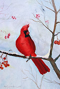 Winter Cardinall