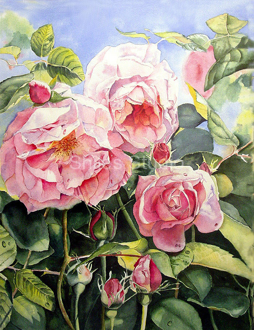 Large Roses 2