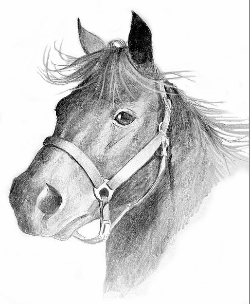 Mare With Halter