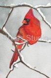 Louie-Cardinal