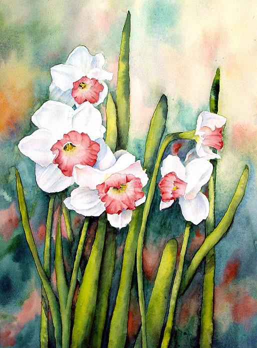 April Narcissus