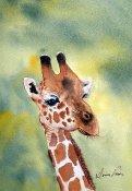dv -giraffe