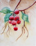 Frosted Rose Hips on Yupo