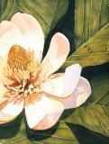 Mary Ann's Magnolia