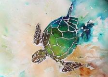 Turtle w Powder