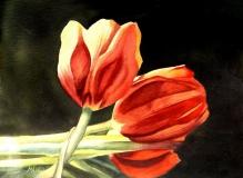 Twilight Tulips