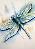 wma__Dragonfly