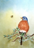 we bluebird